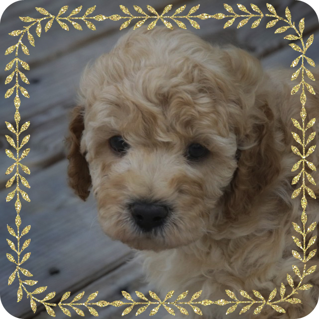 Beauregard puppy frame picture