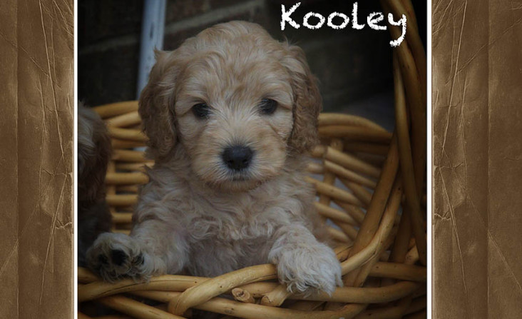 Kooley (Adopted)