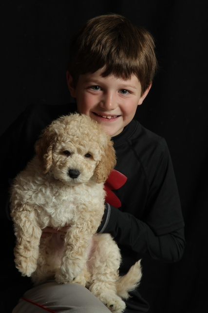 golden Bucky  puppy with boy