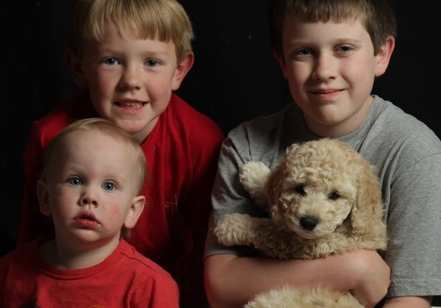 Sadi breeder puppy with kids