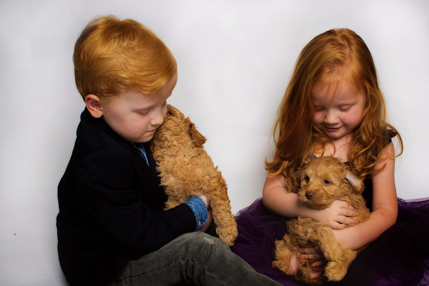 Atlee and Liam-kids-labradoodle-puppy