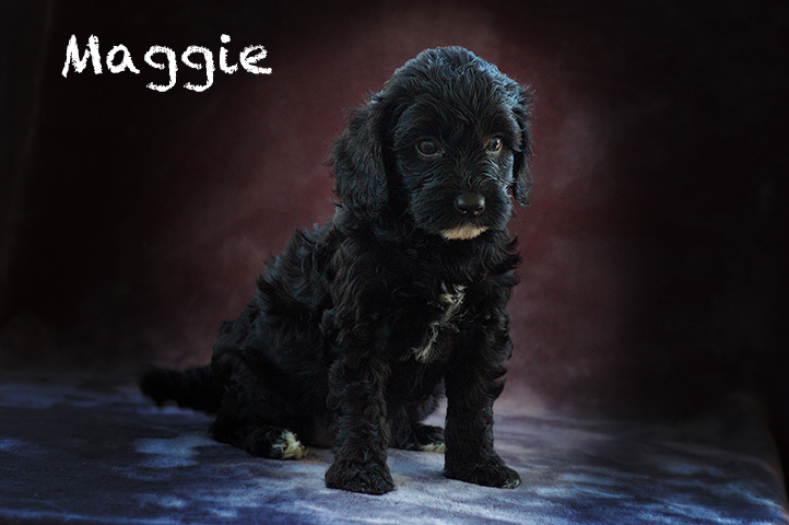 Maggie6