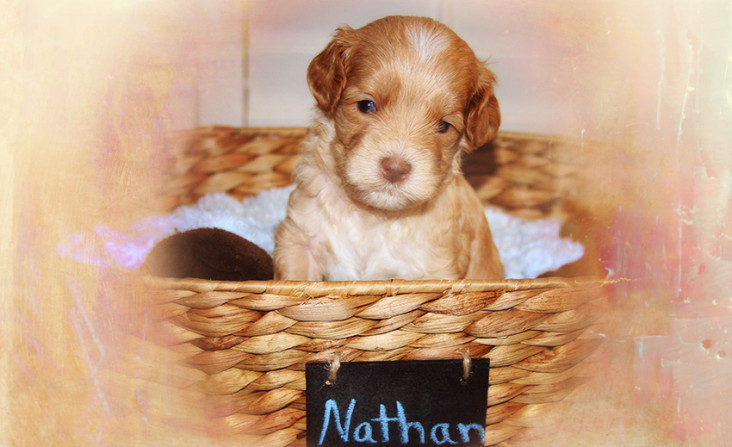 Nathan By Angela puppy