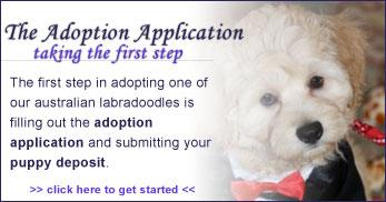 adoption labradoodle puppy US