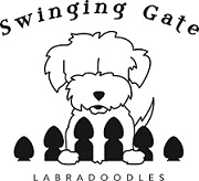 Swinging Gate Labradoodles