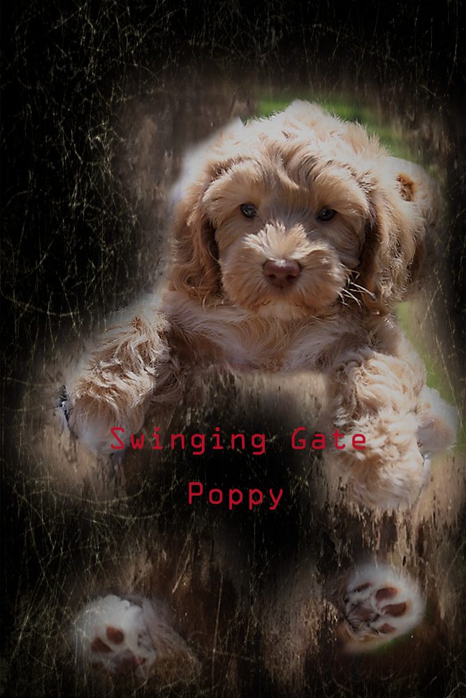 Belle & George's Puppies - Poppy