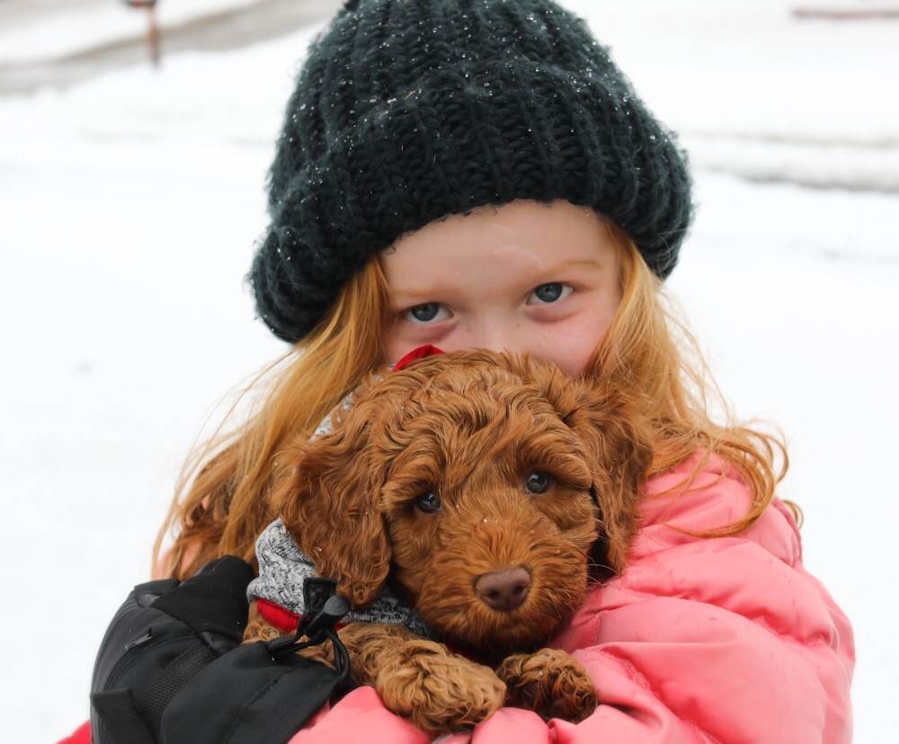atlee and Kennedy dog