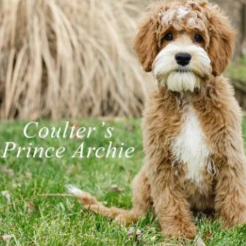 Coulter's Prince Archie